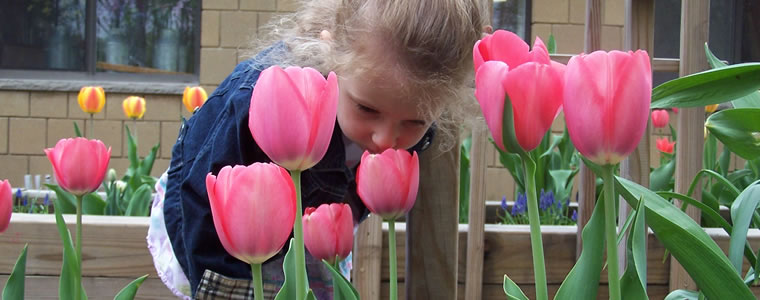 Enjoying_the_Tulips